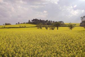 4031337584118__agricultura_vegetal